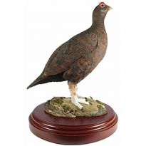 Painted Red Grouse