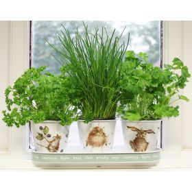 Wrendale Herb Pots and Tray Set