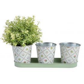 Botanical Plant or Herb Pots on a Tray