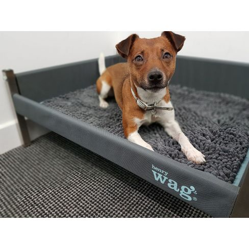 Elevated Dog Bed
