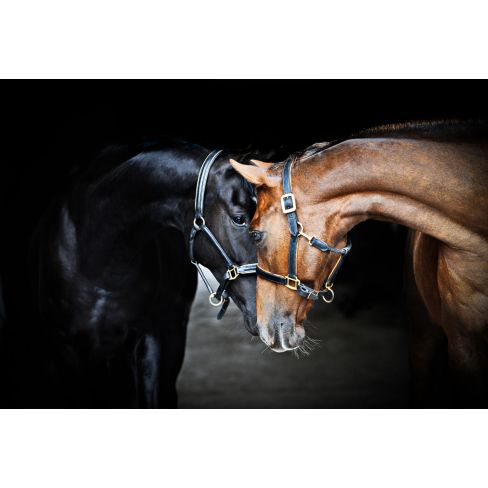 Old Friends Worktop Saver