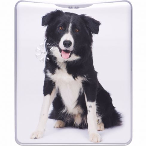 Border Collie Pocket Flash Torch