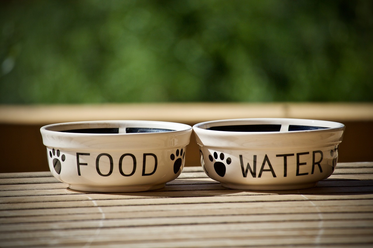 A dog food and water bowl with paw prints on