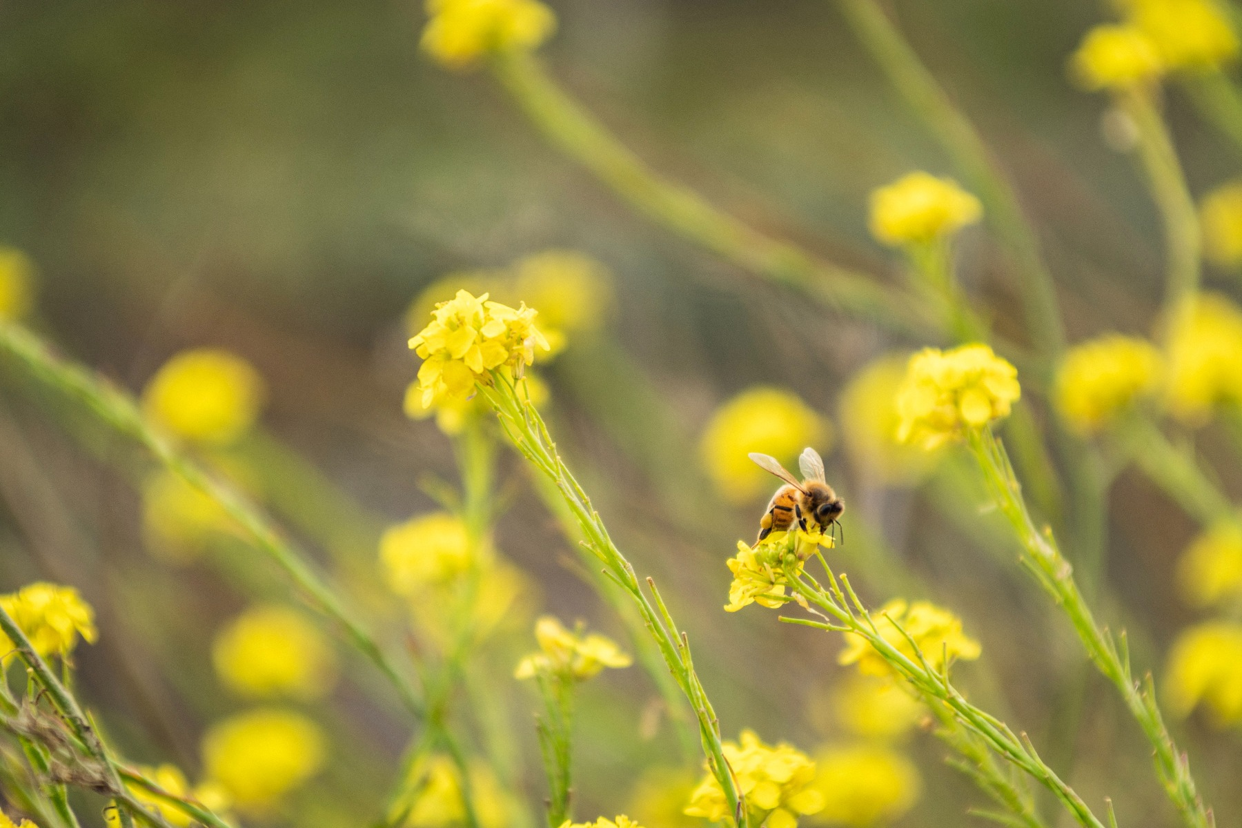 Bee on yellow and green flowers