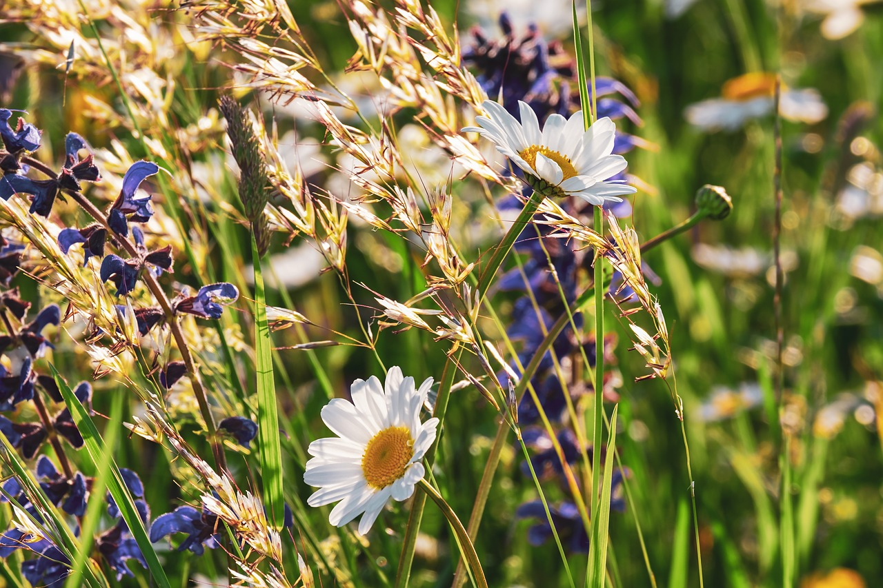 Wildflowers and grains growing in the countryside in the sunshine during spring.