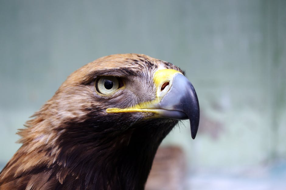 Learn More About Britain S Birds Of Prey Fur Feather And Fin