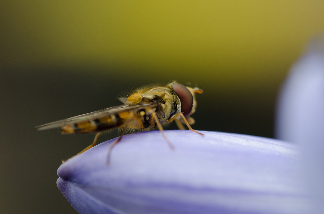 A golden hoverfly perched on the lilac leaf of a plant.