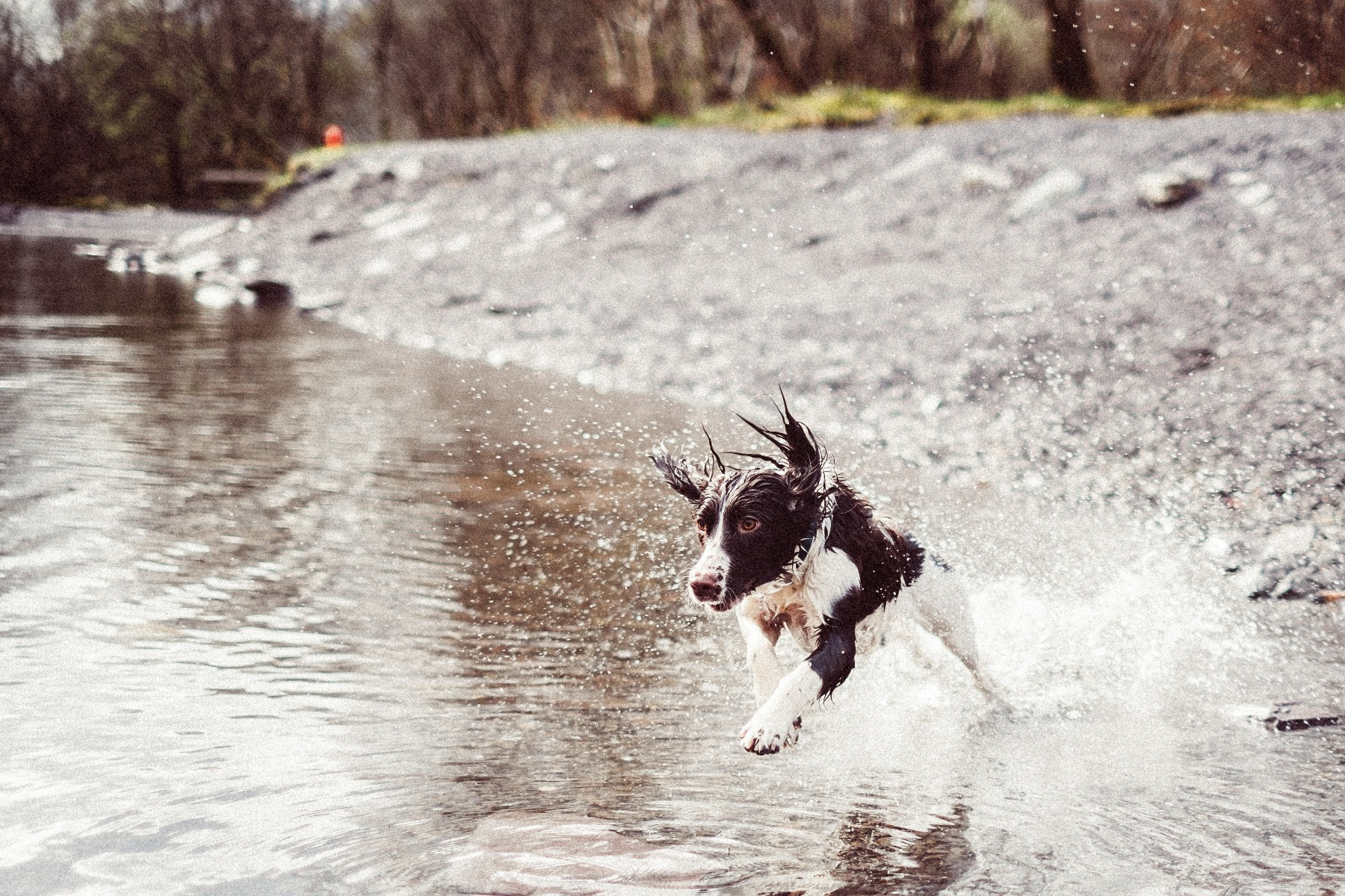 puppy playing in the water