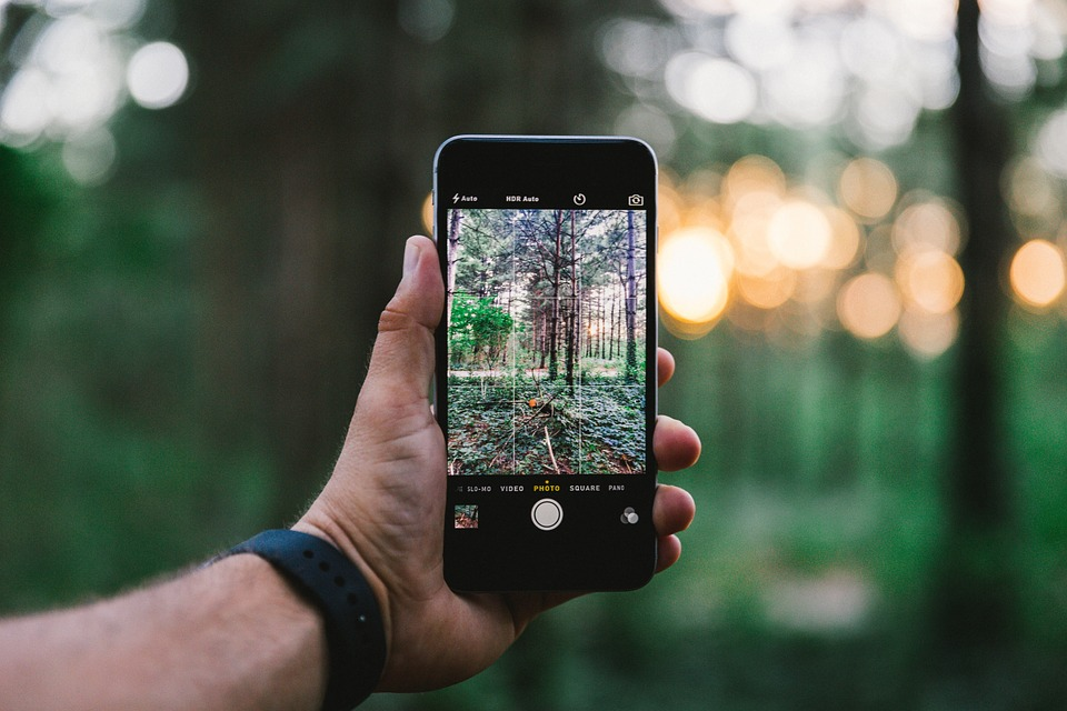 Man using app to identify trees