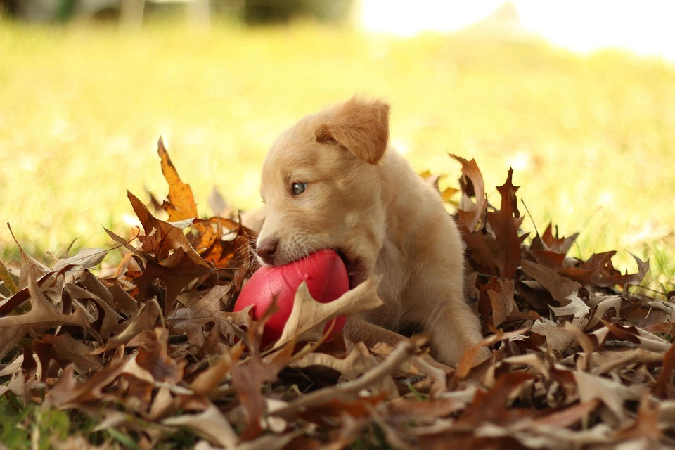Puppy playing with ball in leaves