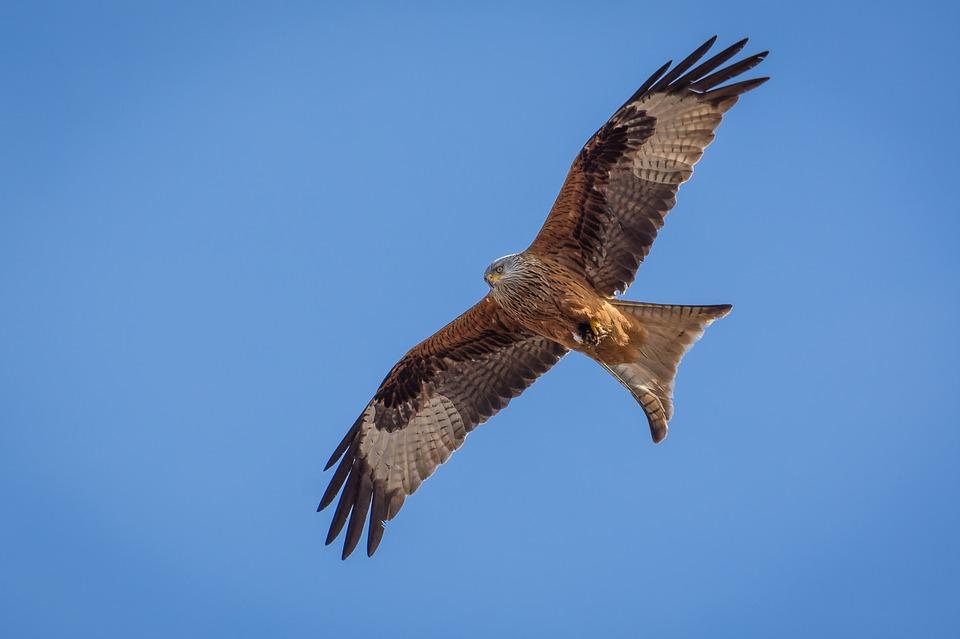 Red kite flying under blue sky