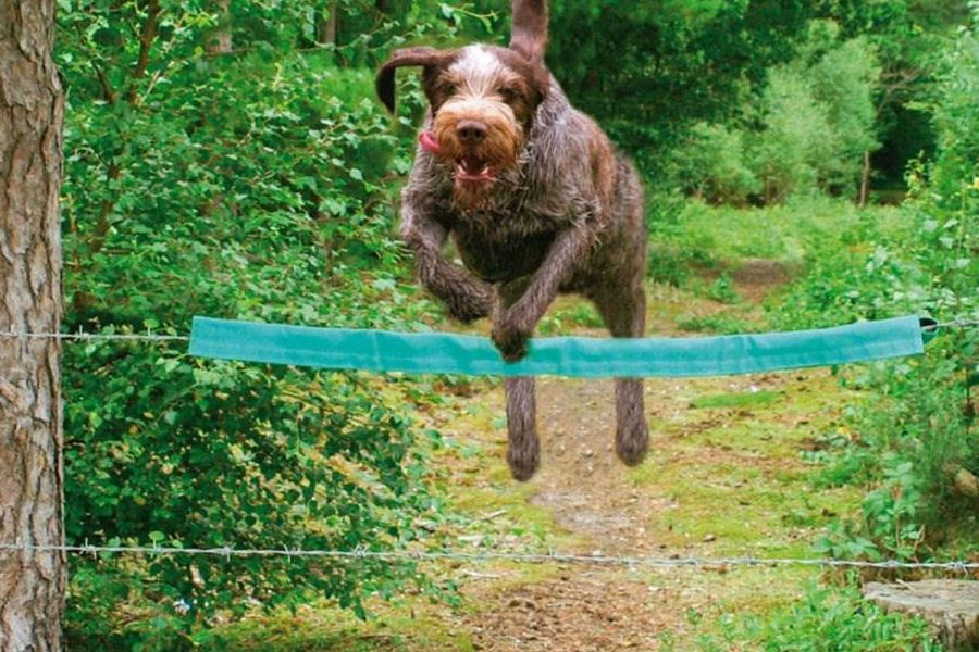 Dog jumping over a wire fence