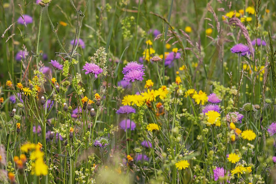 Meadow full of yellow and purple wild flowers